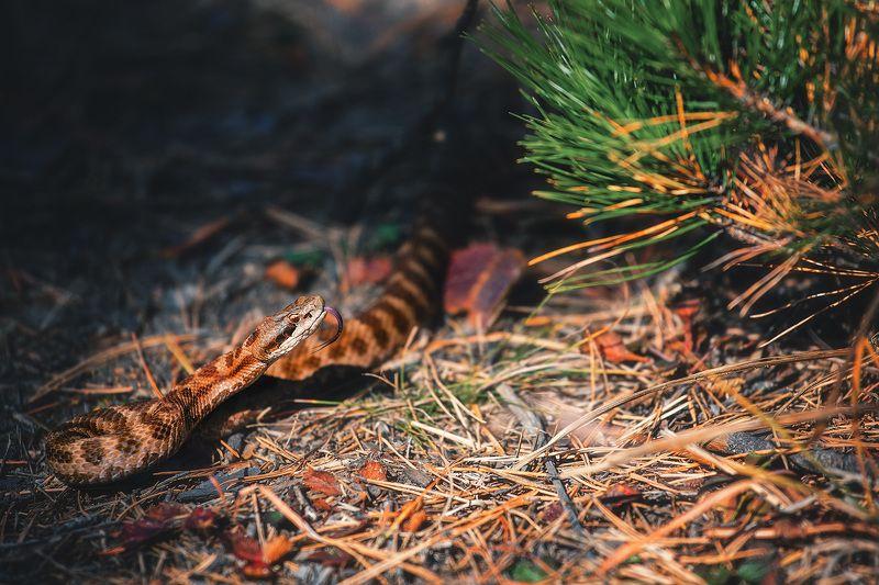 змея, взгляд, осень Неожиданная встречаphoto preview