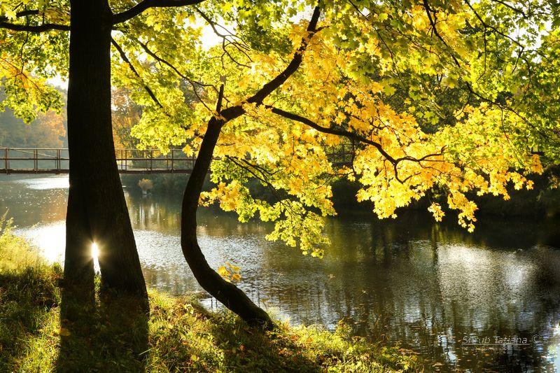 природа, парк, река, осень, мост Золотая осень у рекиphoto preview