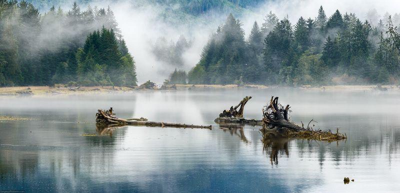 туман, озеро, дерево, лес, пейзаж, Канада В туманеphoto preview