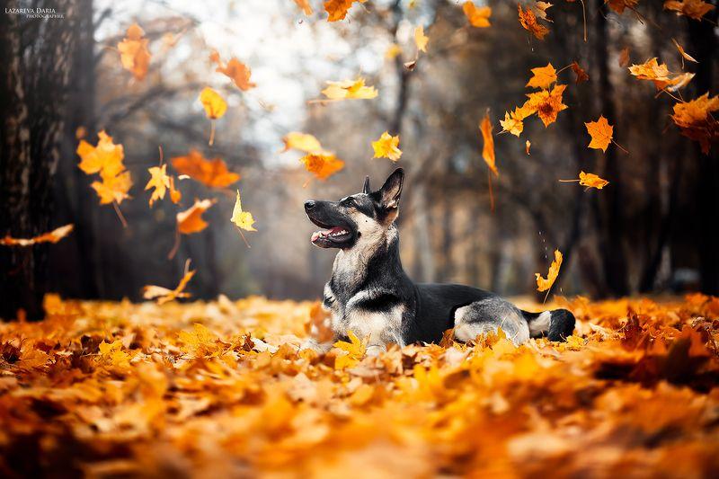 собака, природа, листопад, лес, осень Листопадphoto preview