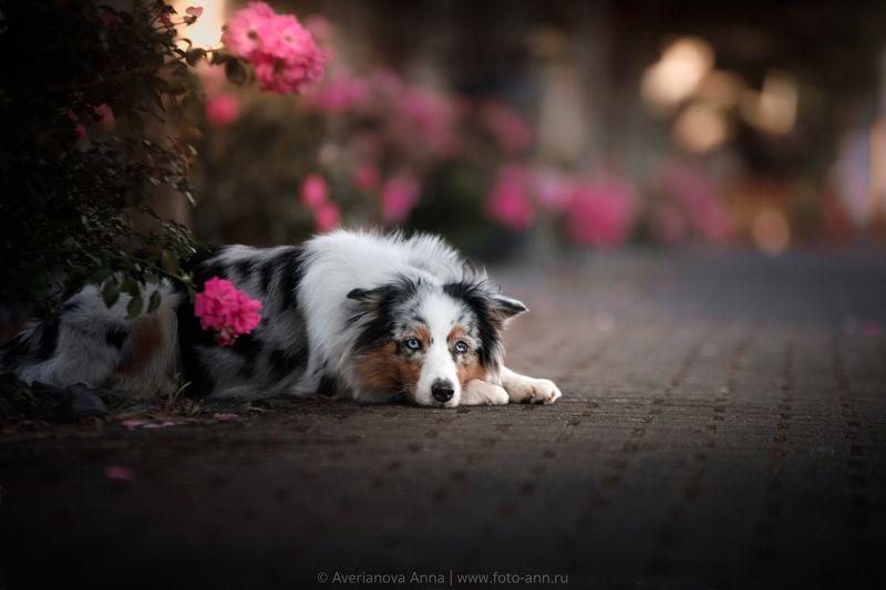 собака, город, вечер вечерphoto preview