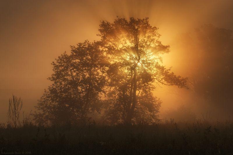 2018, россия, весна, май, утро, туман, деревья, лучи, солнце Волшебство майского утраphoto preview