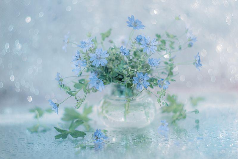 kwiaty, flowers,niebieski, blue blue ...photo preview