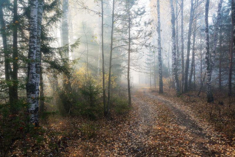 сергей алексеев, фото Туманное утроphoto preview