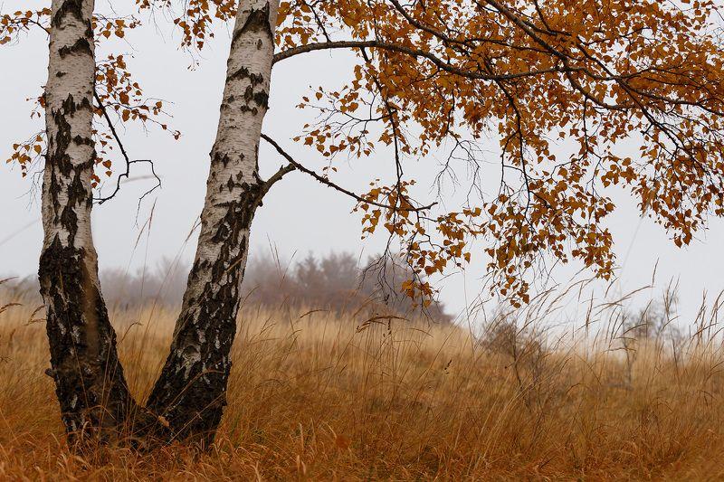 Березовая осеньphoto preview
