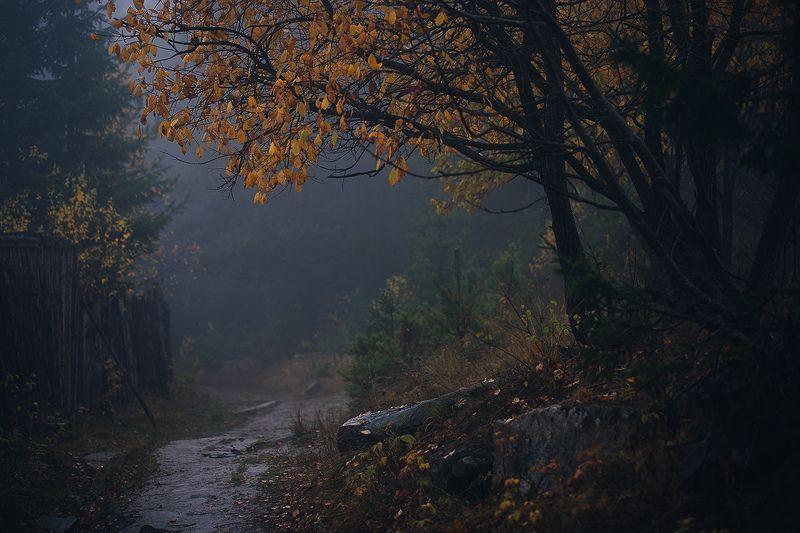 осень, лес, россия, урал, туман, природа, пейзаж photo preview