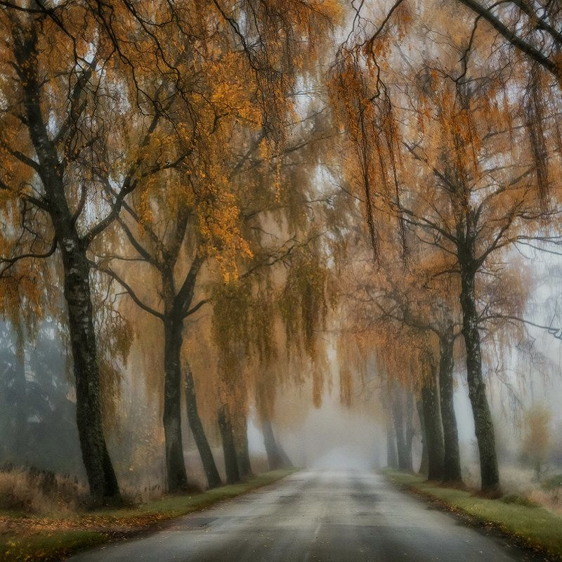 Birch Roadphoto preview