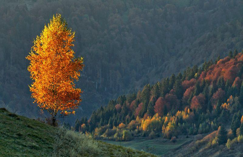 карпаты,осень, утро, горы, берёза С солнцем обвенчана...photo preview
