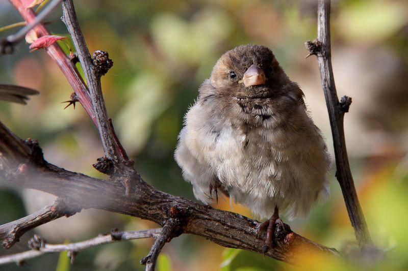 #sparrow #bird #nature  Sparrowphoto preview