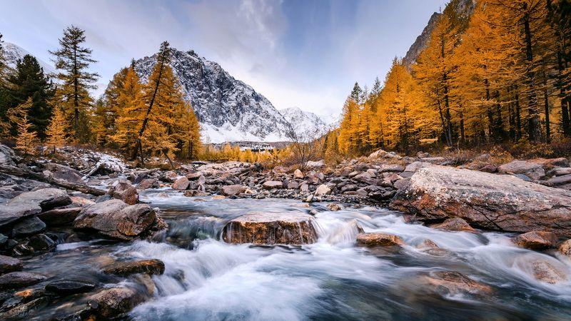 осень сказка красота горы алтай актру золотая река лиственница Актру.photo preview