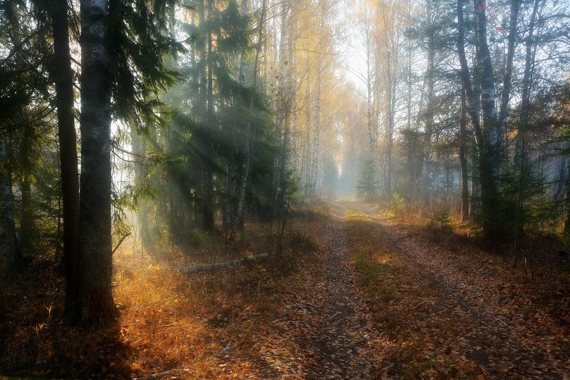 сергей алексеев, фото В октябреphoto preview