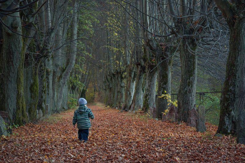лес, осень, природа, пейзаж По осенней дорожкеphoto preview