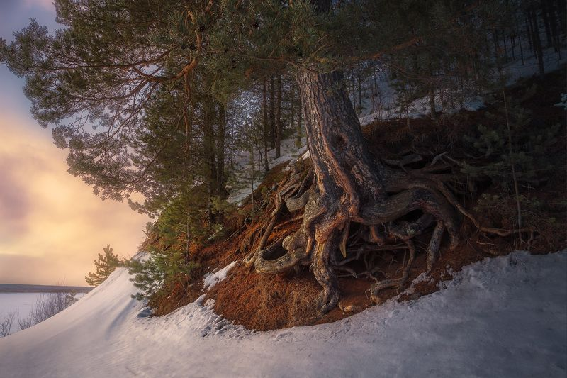 зима, весна, закат, лес, холм, мороз, снег, вечер, река Кракенphoto preview