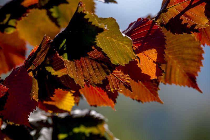 казахстан, горы, тянь-шань, заилийский алатау, осень Осень в Северном Тянь-Шанеphoto preview