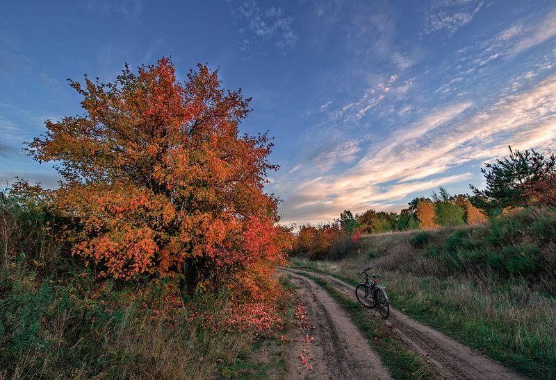 пейзаж, осень Осень пахнет дикими яблокамиphoto preview