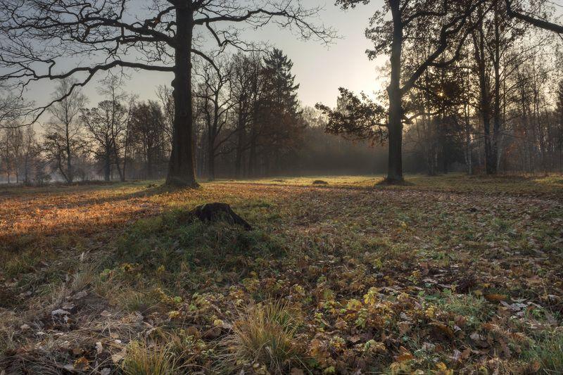 Утро в Баболовском паркеphoto preview