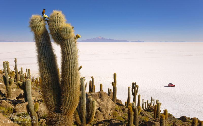 isla incahuasi, altiplano, bolivia, salt, cactus, echinopsis atacamensis Остров в соленом море Уюниphoto preview