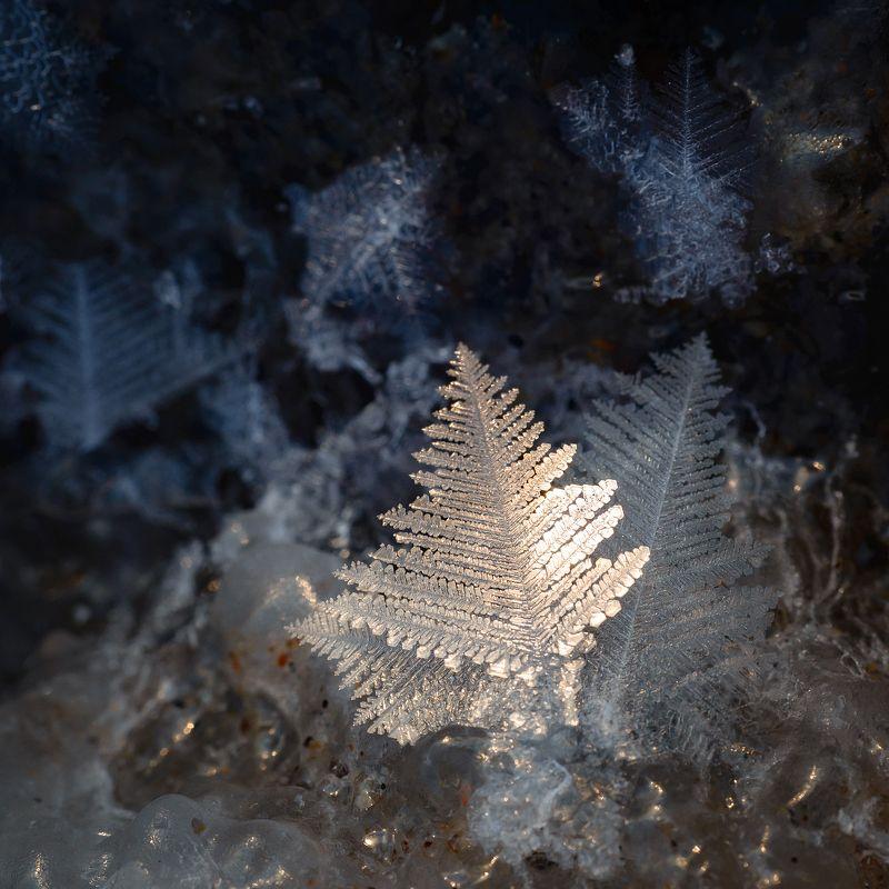 зима, море, кристаллы, снежинки Зимнее украшение Охотского моряphoto preview