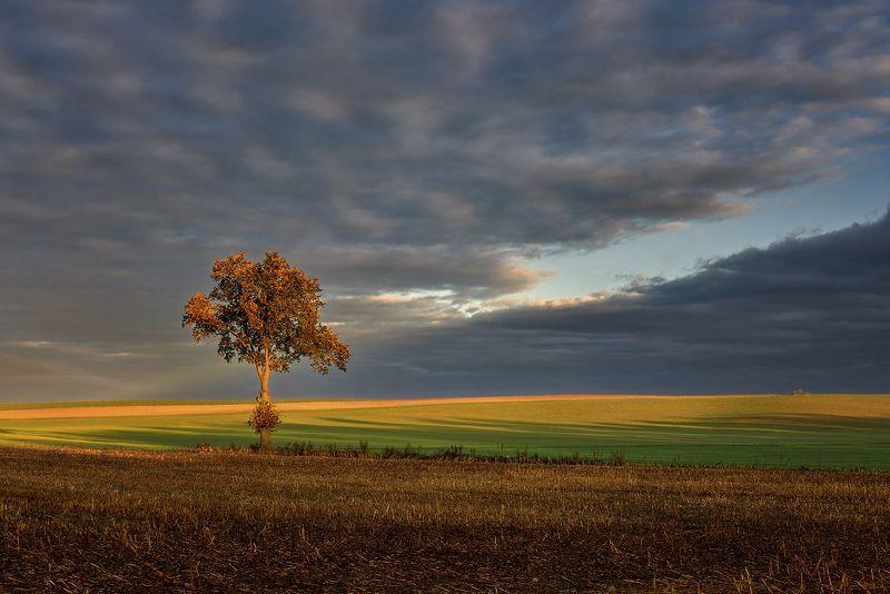 tree, autumn, fields, meadow, landscape Lonelyphoto preview