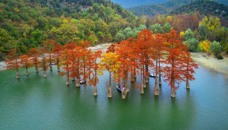 Озеро кипарисовphoto preview