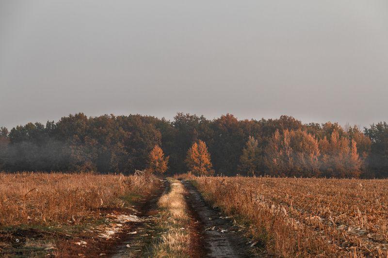 лес, утро, дорога, поле, очень Дрёмный лес встречает рассвет...photo preview