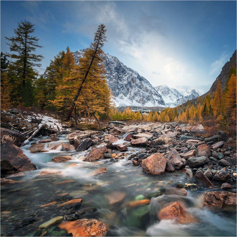 алтай,озеро,осень,золотая,горы,лиственница,вода Актру.photo preview