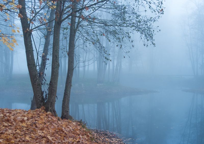 Foggy morningphoto preview