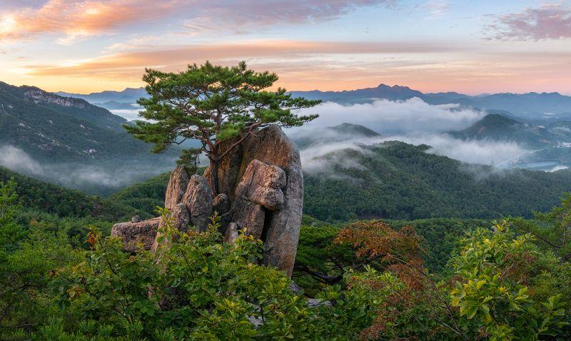 mountain peak, Bonsai, pine tree Stick In The Rockphoto preview