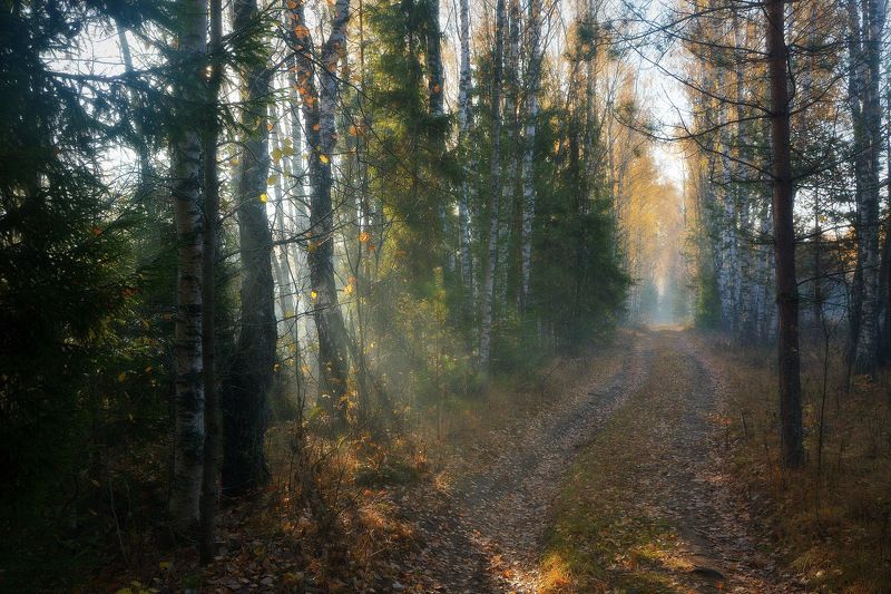 сергей алексеев, фото По лесной дорогеphoto preview