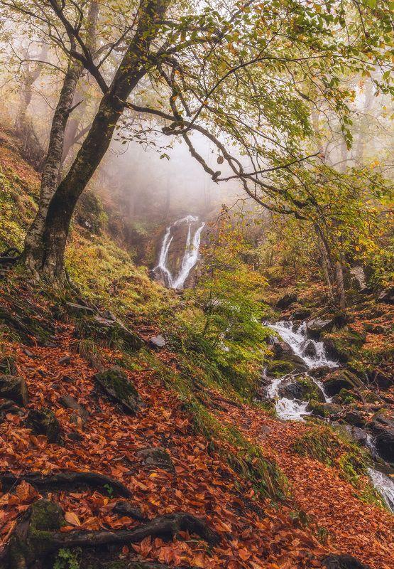 сочи, горы, река, ручей, водопад, осень, листья, деревья, поход, туман, осенняя листва Из осеннего тумана...photo preview
