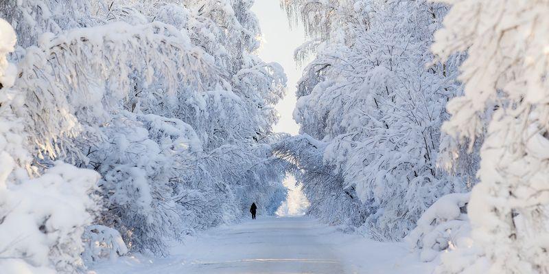 зима, снег, иней, мороз, дорога Тоннельphoto preview