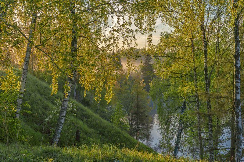 Природа подмосковья, весна в подмосковье, фототуры. Золото весны.photo preview