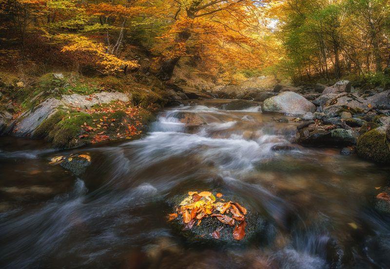 Oсенний лесphoto preview