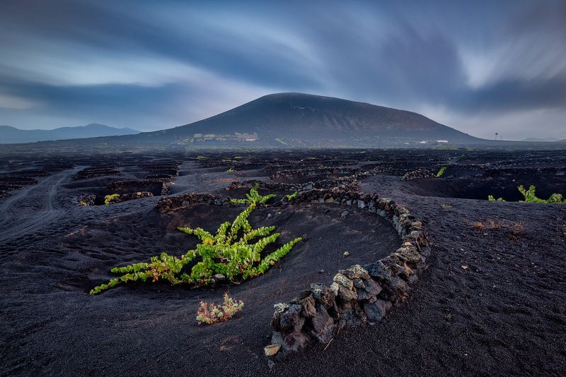 canary islands, canary, island, volcano, vino, wine, volcanic, atlantic, holidays,morning La Geriaphoto preview