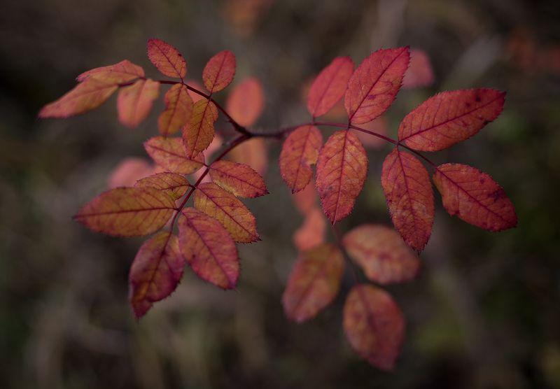 осень, листва Осеньphoto preview