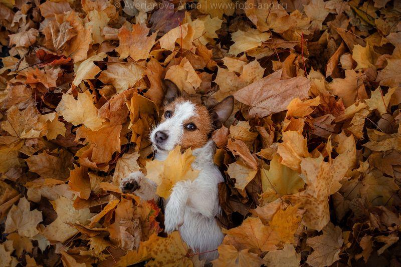 собака, осень, милая Осеннее настроеньеphoto preview