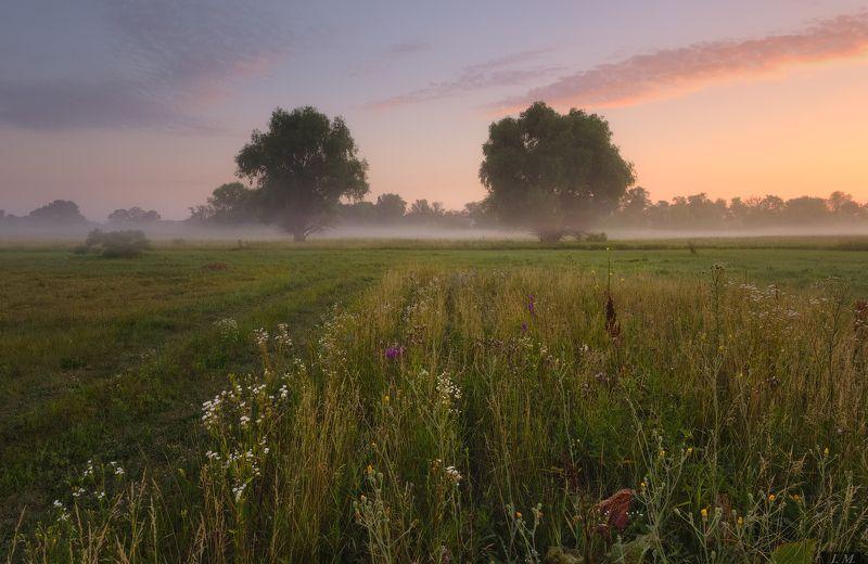 утро, лето, луг, туман, рассвет, природа, свет, sunrise, summer, morning, fog, misty, light, nature, landscape, foggy, colors, grass, trees, meadow вспоминая ушедшее лето ..photo preview