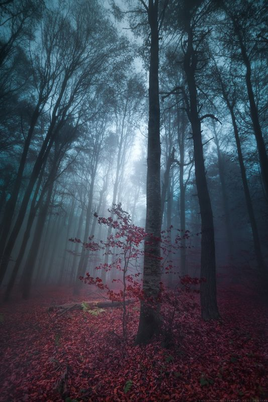 autumn, fall, landscape, forest, trees, wide angle, fog, mist, mountain, woods, spring, bulgaria, nature, green, plant, weed, leafs, dream, panorama, woodland, gora, mountain, grass, magic, dreamy, colors, foggy Осенние сказкиphoto preview