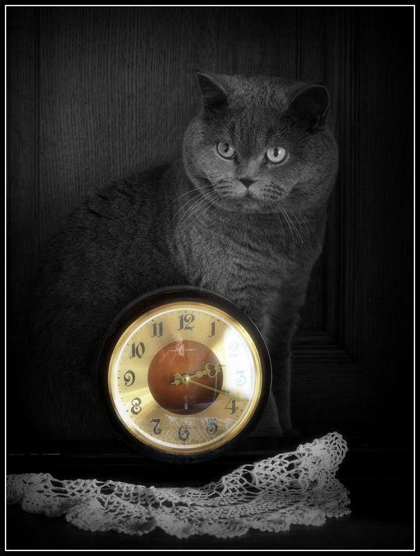 сергей алексеев, фото Часовой Весныphoto preview