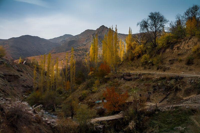 Аксарсайская осеньphoto preview