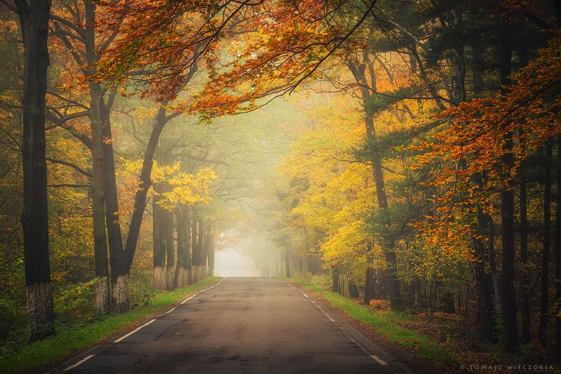 autumn, colours, silesia, poland, road, trees, landscape, fog, mist, silence, amazing, awesome, travel Autumn roadphoto preview