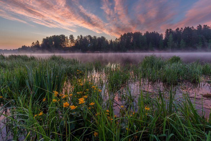 рассвет пейзаж утро туман река Фееричное пробуждение нового дня на реке Оредеж с красивыми цветами калужницы.photo preview