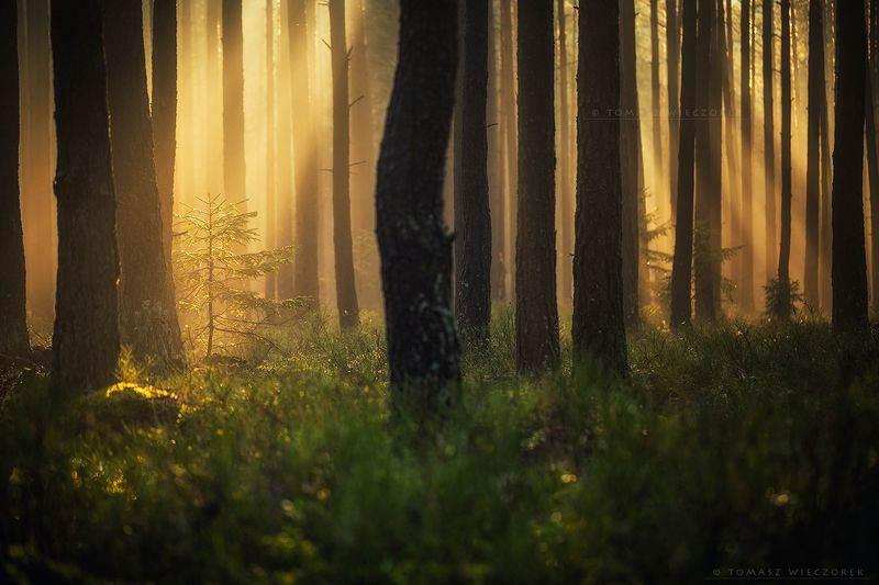 forest, poland, polish, landscape, mushroom, trees, light, awesome, shadows, fog, mist, beautiful, growing A new life is growingphoto preview