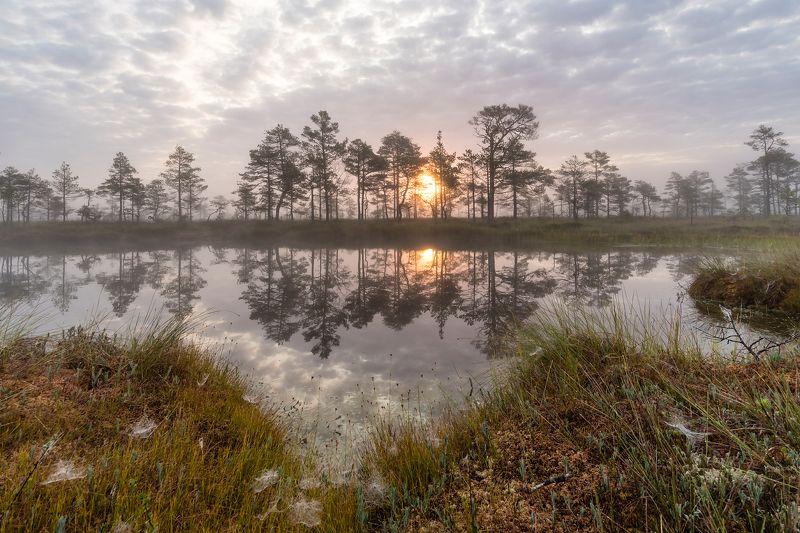 Рассвет на болоте.photo preview