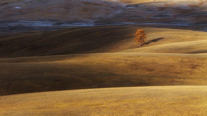 утро, рассвет, осень, дерево Контрасты осениphoto preview