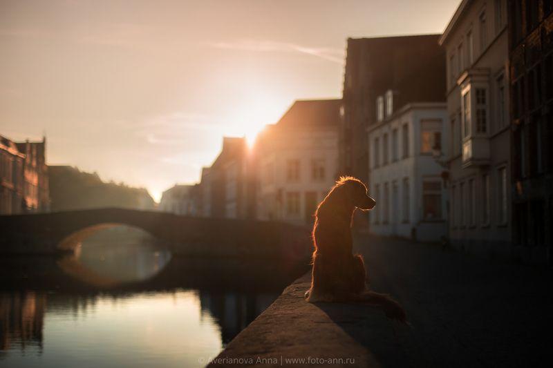 собака, город, рассвет photo preview