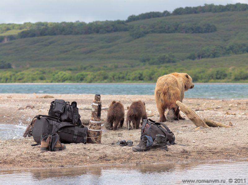 камчатка, медведь, озеро курильское, фототехника - Нет, дети, фотографией сыт не будешь. Пойдем лучше рыбу ловить.photo preview