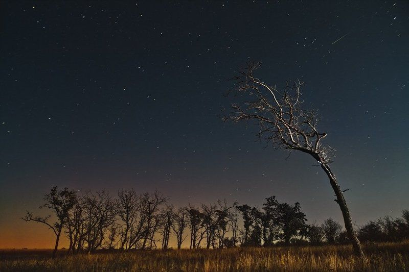 звездный дождь, batoev , батоев, дерево, дерево, звезды, небо, пейзаж ,комета, большая медведица, звезда Звездный дождьphoto preview