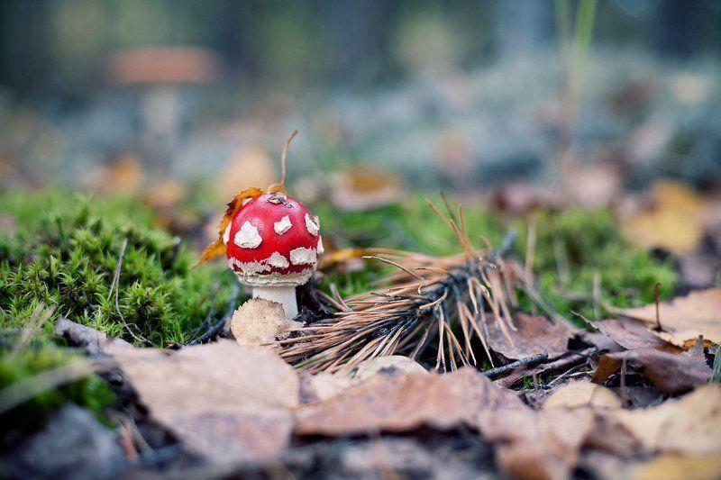 лес, грибы, осень В лесуphoto preview