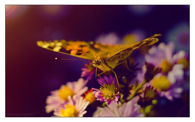 butterflyphoto preview